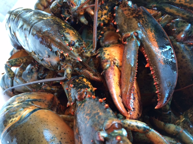 LobsterPic2015